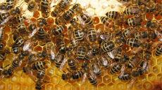 Pszczelarze biją na alarm, minister uspokaja