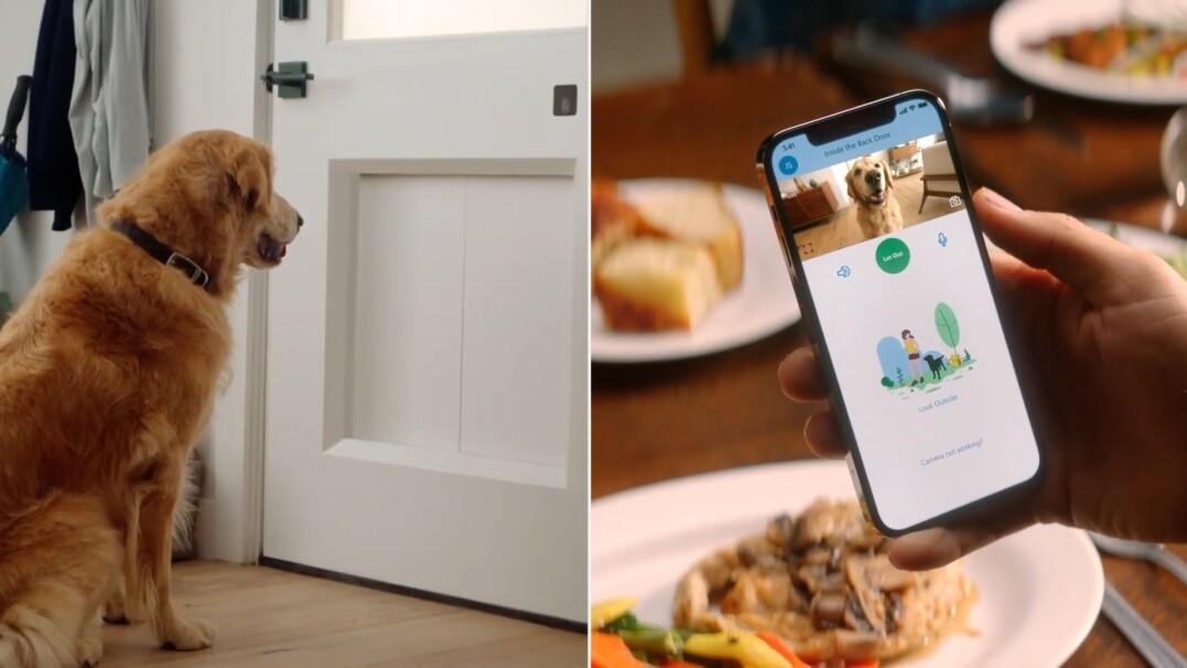 Te drzwi pozwolą twojemu psu wyjść na zewnątrz, kiedy tylko zechce
