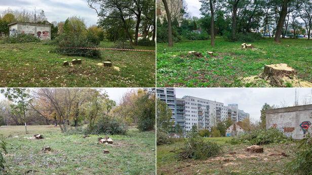 Oszczędzą drzewa na ul.Belgradzkiej tvnwarszawa.pl