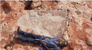 Odkrycie tropów dinozaurów w Australii