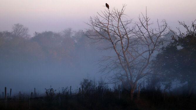Smog rozsnuł się nad Polską. Normy przekroczone w wielu miejscach