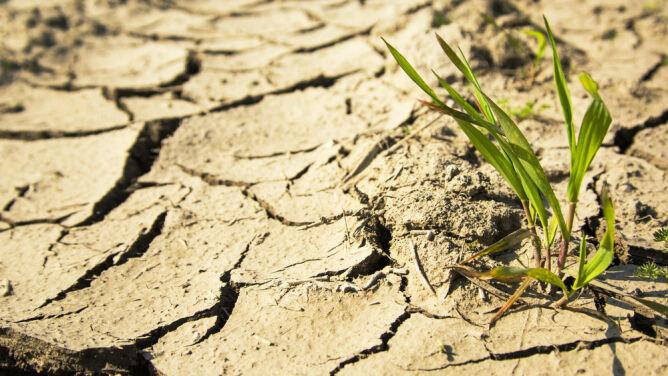 Do końca wieku ponad dwa razy więcej osób może cierpieć z powodu suszy