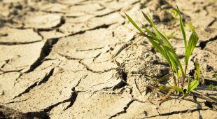Zmiany klimatu a rolnictwo