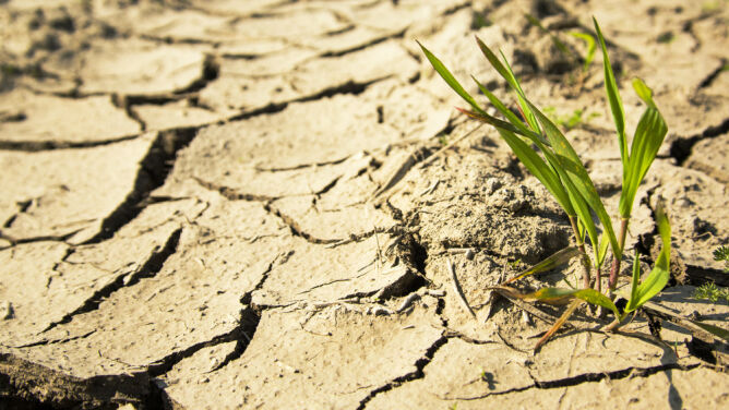 """Polska stanie się pustynią? """"Będziemy mieć susze coraz częściej, być może co roku"""""""