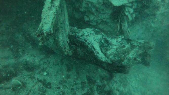 Podwodny, prehistoryczny las i jego zagadki. <br />Mogą pomóc w rozwoju medycyny